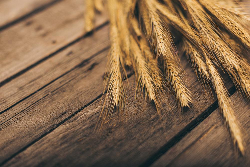 Минагро не будет вводить квоты на экспорт продовольственной пшеницы