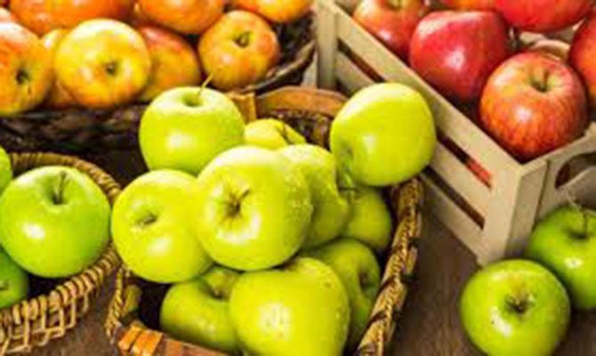 Украина бьет рекорды по экспорту яблок