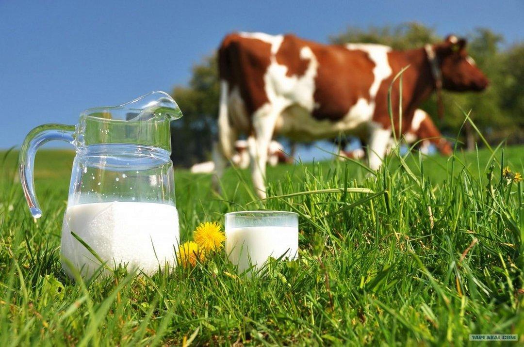 К 2030 году Украина может стать крупнейшим экспортером молока