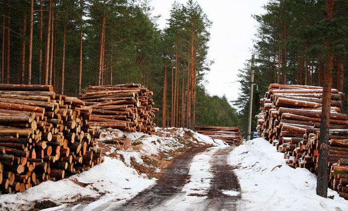 Лес в Украине будут продавать через аукцион — поручение Гройсмана