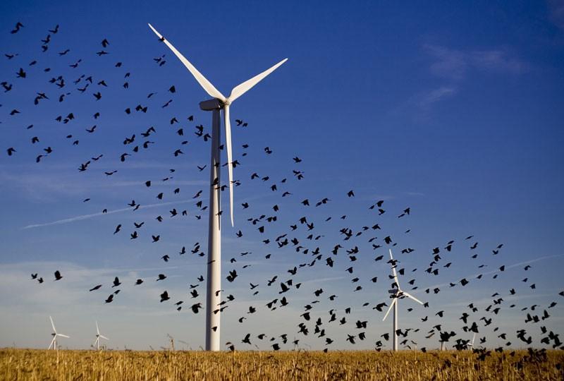 Ветряк работает, птицы летят и не падают