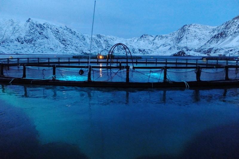 Компания Signify стала партнером рыбоводческого хозяйства Australis Seafoods в Чили